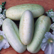 Cucumber White Wonder - 20 Seeds / 100 seeds